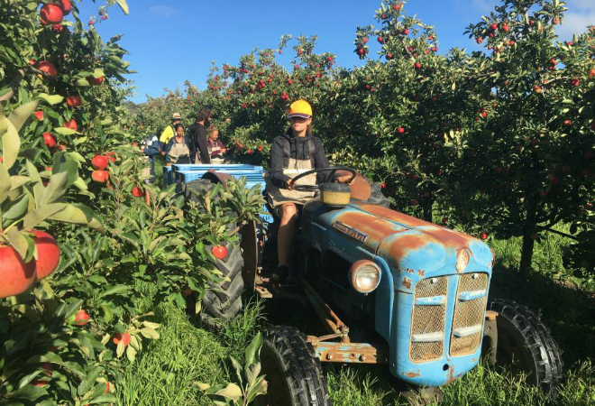 'Backpacker tax' delay: creating uncertainty for farmers