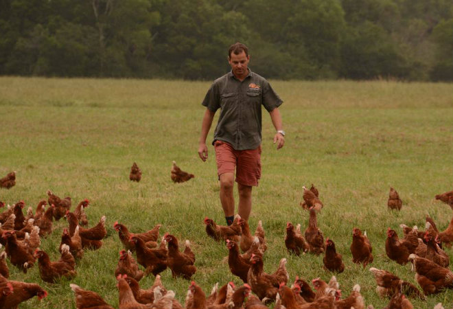 Free range egg farming business fights CHOICE campaign